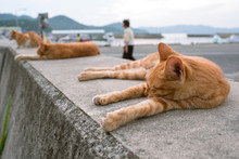 Sleeping Stray Cats In Teshima...
