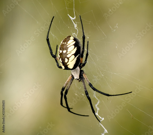 Photo Close up of yellow and black garden spider with diffused background