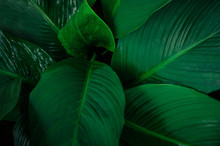 Foliage In Dark Green Pattern ...