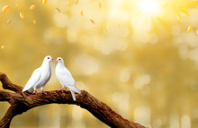 Two White Seagulls With Love. Valentine And Sweetest Day Concept. Freedom Of Couples Doves Bird On The Tree With Natural Background.