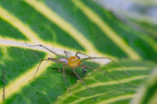 Photo A spider on a green leaf