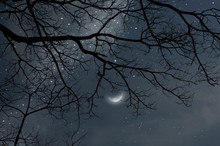 Black Branches And Waning Moon...