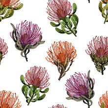 Seamless Pattern With Exotic Pincushion Protea Flowers.