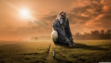 Giant Gorilla, Man Walking Tow...