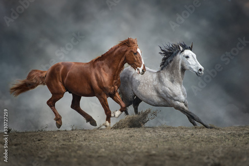 Fototapety, obrazy: Horses run in dust