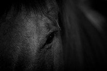 Horse Face Focus On Eye