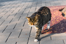 The Homeless Chinese Cat Is Wa...