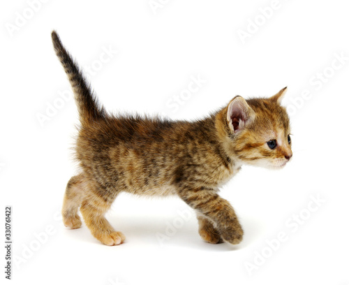 Small brown kitten isolated on white Tableau sur Toile