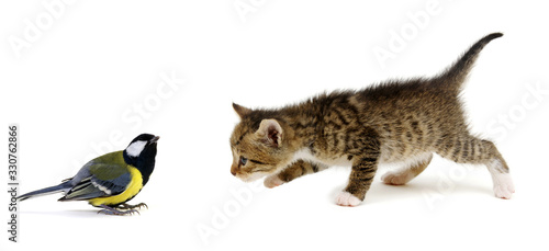 Little beautiful funny kitten and bird Tableau sur Toile