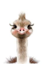 Cute Ostrich Print • Baby An...