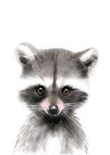Raccoon Print • Baby Animal ...