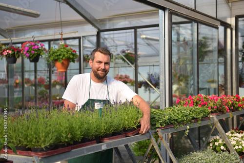 Cuadros en Lienzo happy worker growing flowers in a greenhouse of a flower shop