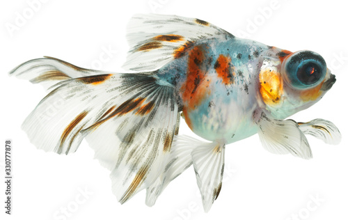 Fotomural gold fish isolated on white