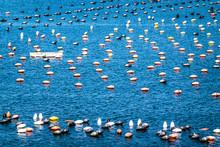 Empty Buoys At A Port
