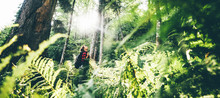 Woman With Backpack Walk Through Forest With Fern Leaves At The Sunset. Traveling In Nature Concept. Girl Enjoying The Forest. Сoncept Of Nature And Happy Life, Adventure.