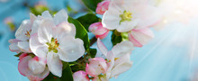 Apple Blossoms And Blue Sky In...