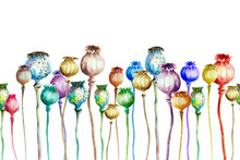 Multi-colored Poppy Capsules On A White Background, Seamless Pattern, Watercolor.
