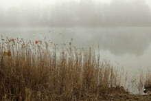 Foggy, Wintery Images Of A Lak...