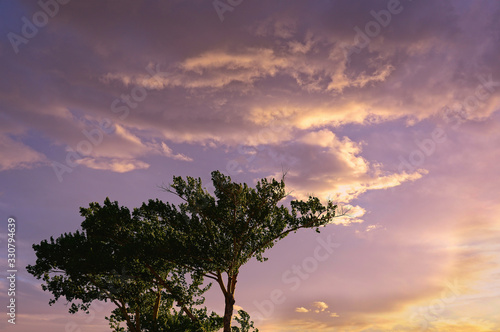 Tree at sunset, Albuquerque, New Mexico Canvas Print