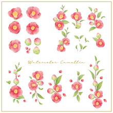 Watercolor Camellia Flowers Co...