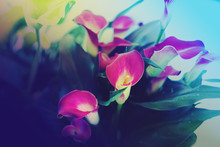 Bouquet Of Calla Lilies Abstra...