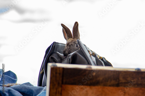 rabbit in lady bag in scenery four Canvas Print