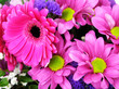canvas print picture - Bouquet of bright magenta gerbera and chrysanthemums, floral arrangement, floral background.