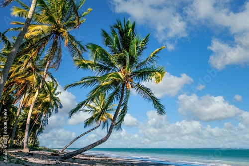 Beautiful tropical landscape of coconut trees along the shore under cloudy blue skies