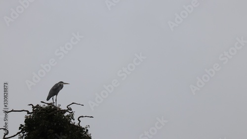 Low angle shot of a Heron bird standing on a tree branch with a gray sky in the Canvas Print