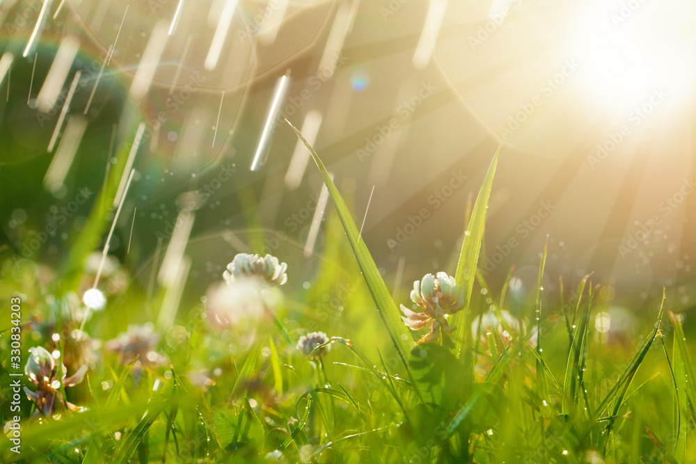 Fototapeta Magic background with clover and raindrops. Beautiful summer landscape