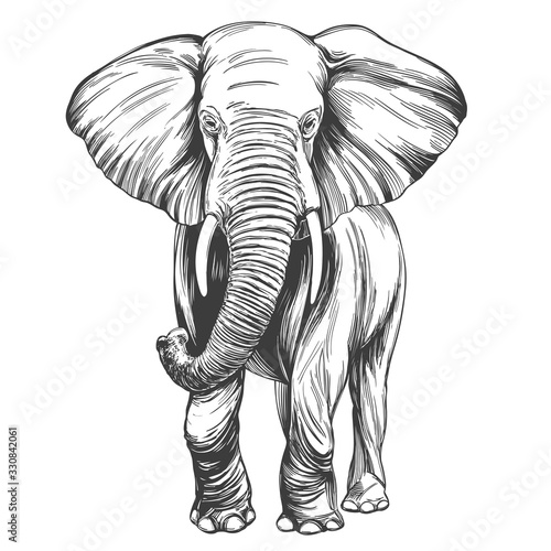 elephant hand drawn vector illustration realistic sketch Billede på lærred