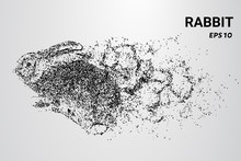 Rabbit From The Particles. A Rabbit Consists Of Circles And Dots. The Rabbit Splits Into Molecules.