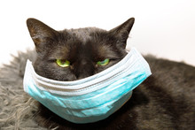 Portrait Of A Common, Funny Black Cat With Green Eyes And Face Mask. Concept Of Illness Of Pet And Viral Infections In Veterinary. Concept Of COVID 19 Not Contagious For Animals.
