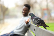 Happy Black Man Trying To Reach A Pigeon In A Park