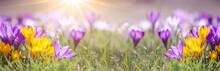 Spring Awakening Background Ba...