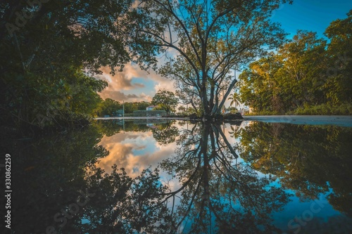 Photo aquatic tree leaves reflection water lake river nature landscape blue green summ