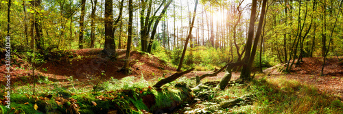 Obraz Forest panorama in autumn with bright sun shining through the trees - fototapety do salonu