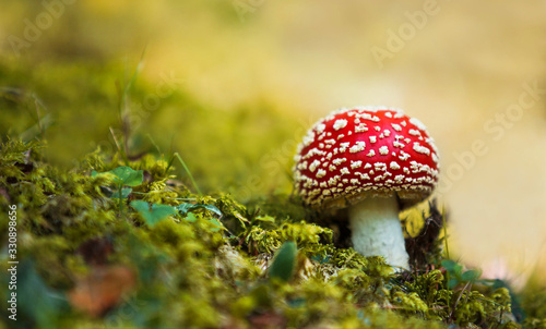 Close-up picture of a Amanita poisonous mushroom in nature Wallpaper Mural