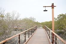 Wooden Walk Way Path In Jubail Mangrove Park,Abu Dhabi,Uae.