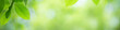 Panoramic view of beautiful leaf in sunny day. Green nature background with copy space for text using for banner and cover page.