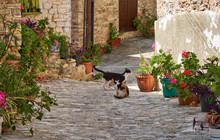 Two Cats On The Narrow Street ...
