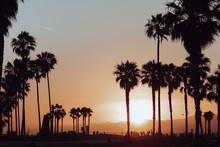 Venice Beach Full Of Palm Tree...