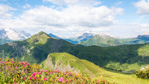 The shadow of clouds on the green Alps with pink flowers in the foreground; Dolomites of Italy