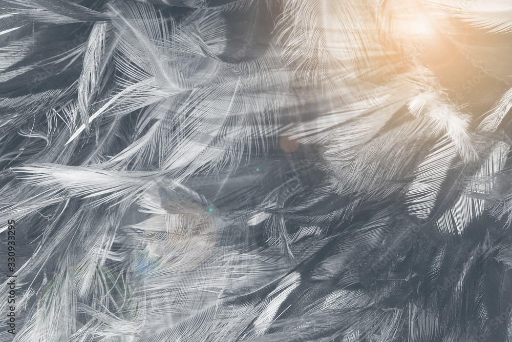 Beautiful black feather pattern texture background with Orange light flare