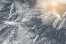 Beautiful Black Feather Patter...