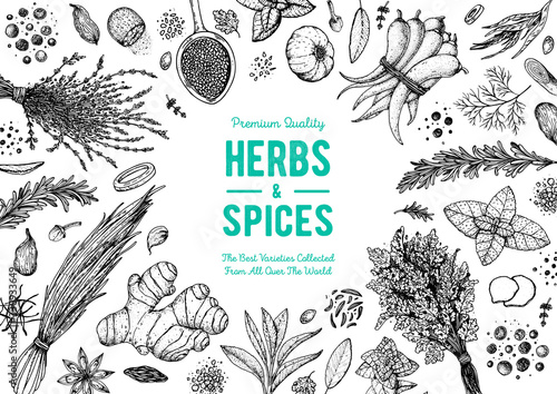 Fototapeta Herbs and spices hand drawn vector illustration. Aromatic plants. Hand drawn food sketch. Vintage illustration. Card design. Sketch style. Spice and herbs black and white design. obraz