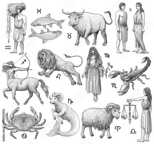 Zodiac signs illustration, drawing, engraving, ink, line art, vector Tapéta, Fotótapéta