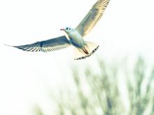 カモメ Seagull 5
