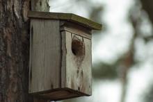 Budka Lęgowa Dla Ptaków W Lesie.