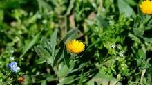 Orange Spring Wildflowers Cale...
